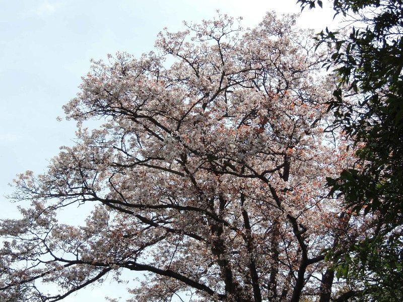 桃畑茶屋②-2DSCN5186